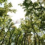 Oasiria développement durable, entreprise éco-responsable