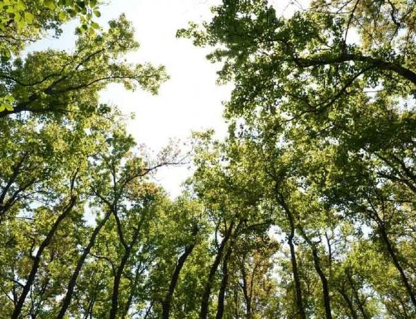 Oasiria,  une entreprise éco-responsable